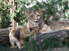 Parc zoologique et botanique de Mulhouse - Sortie