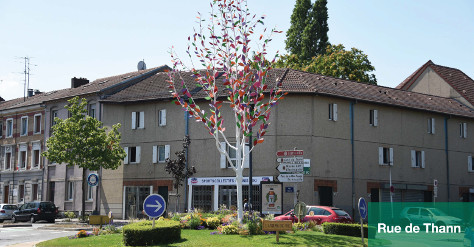 L'arbre en ville - rue de Thann