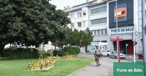 L'arbre en ville - rue de Bâle