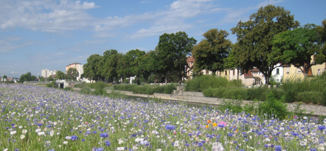 Mulhouse Diagonales : Canal du Rhône