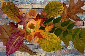 Agencement de feuilles d'automne